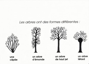 agroforesterie.be arbres têtards