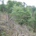 Natura 2000 - Logne avant