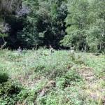 Natura 2000 Balsamines