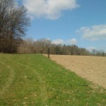 Agroforesterie.be verger en champ