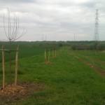 Agroforesterie.be - pommiers en prairie
