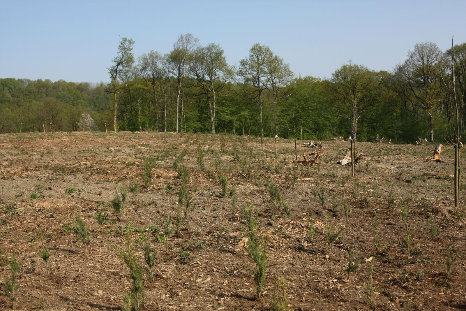 Bois Vert » Références Travaux forestiers