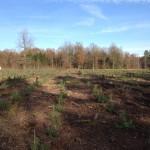Forestier - Pins sylvestres